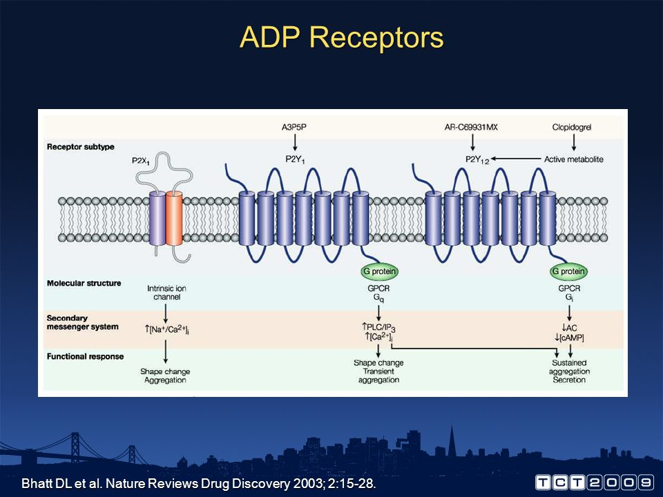 ADP Receptors Bhatt DL et al. Nature Reviews Drug Discovery 2003; 2:15-28.