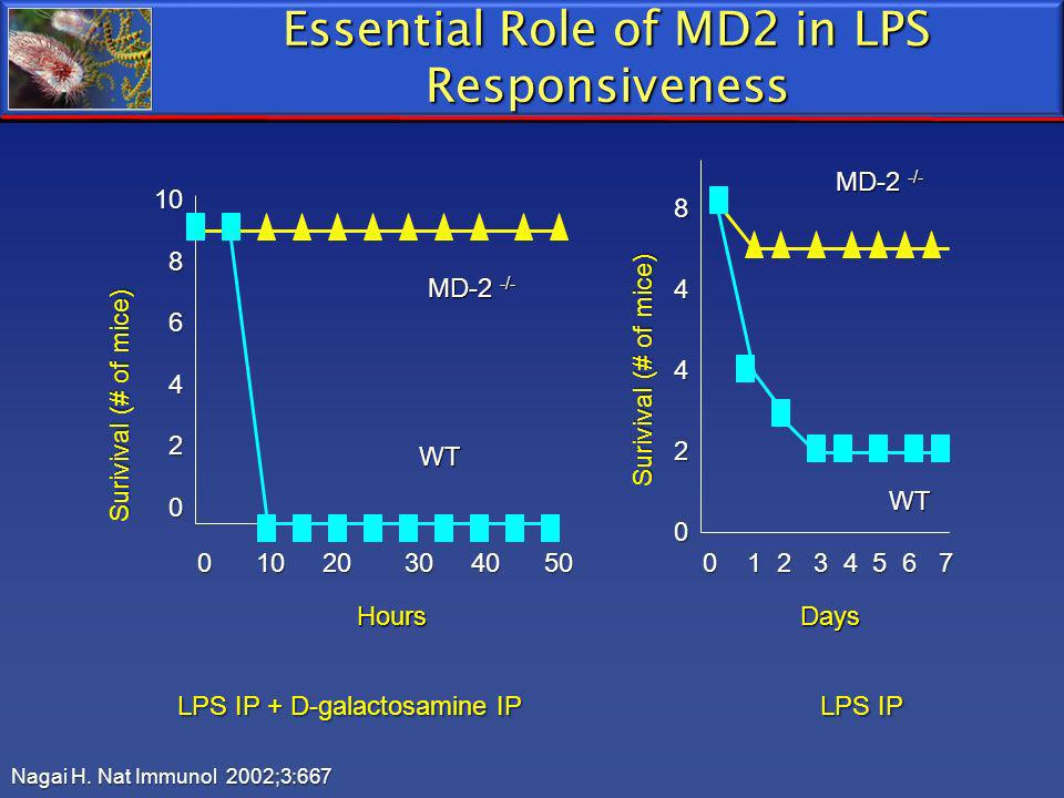 Essential Role of MD2 in LPS Responsiveness