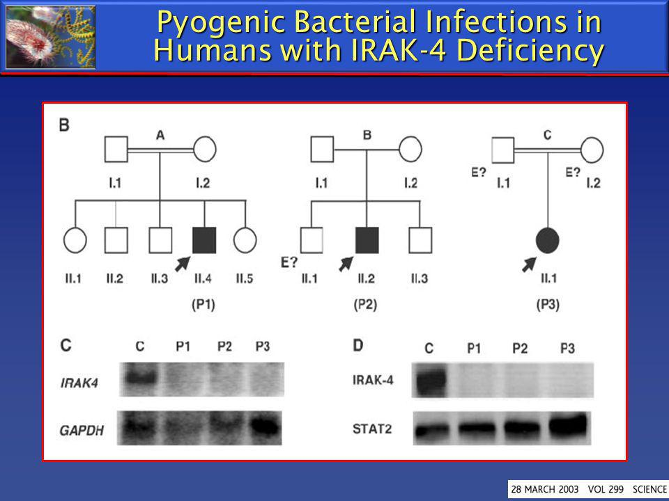 Pyogenic Bacterial Infections in Humans with IRAK-4 Deficiency