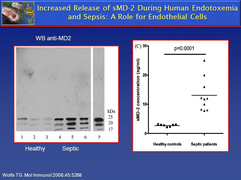 Increased Release of sMD-2 During Human Endotoxemia and Sepsis: A Role for Endothelial Cells