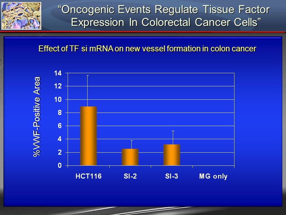 Effect of TF si mRNA on new vessel formation in colon cancer