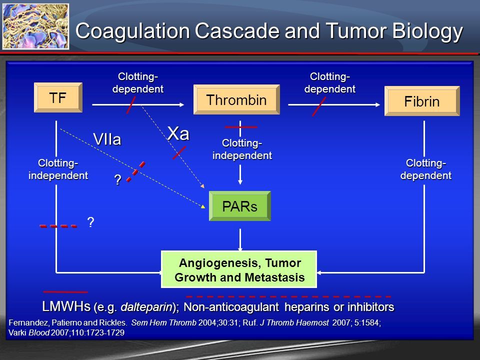 Angiogenesis, Tumor Growth and Metastasis