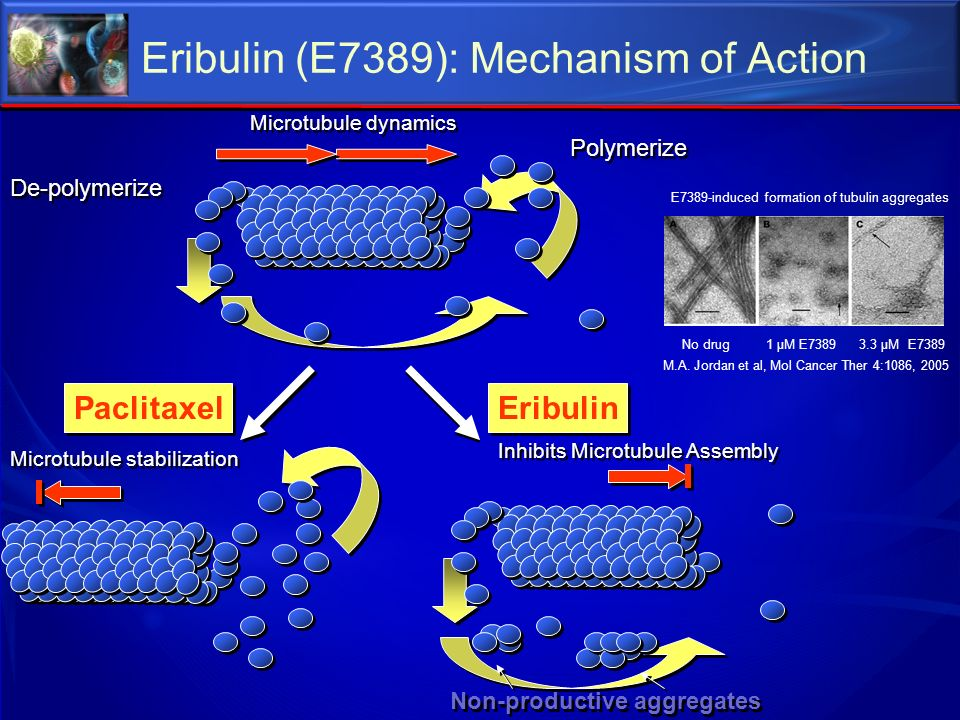 Eribulin (E7389): Mechanism of Action