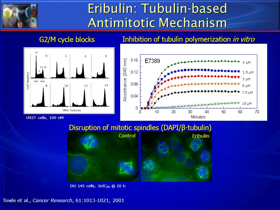 Eribulin: Tubulin-based Antimitotic Mechanism