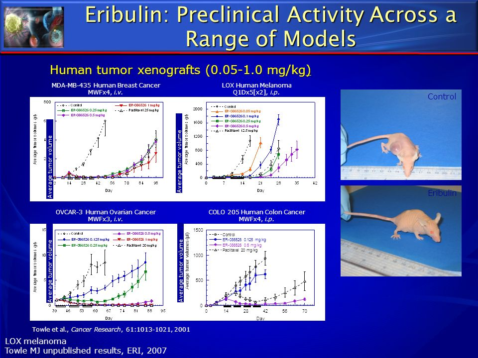 Eribulin: Preclinical Activity Across a Range of Models