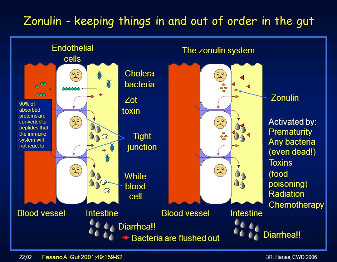 Zonulin - keeping things in and out of order in the gut