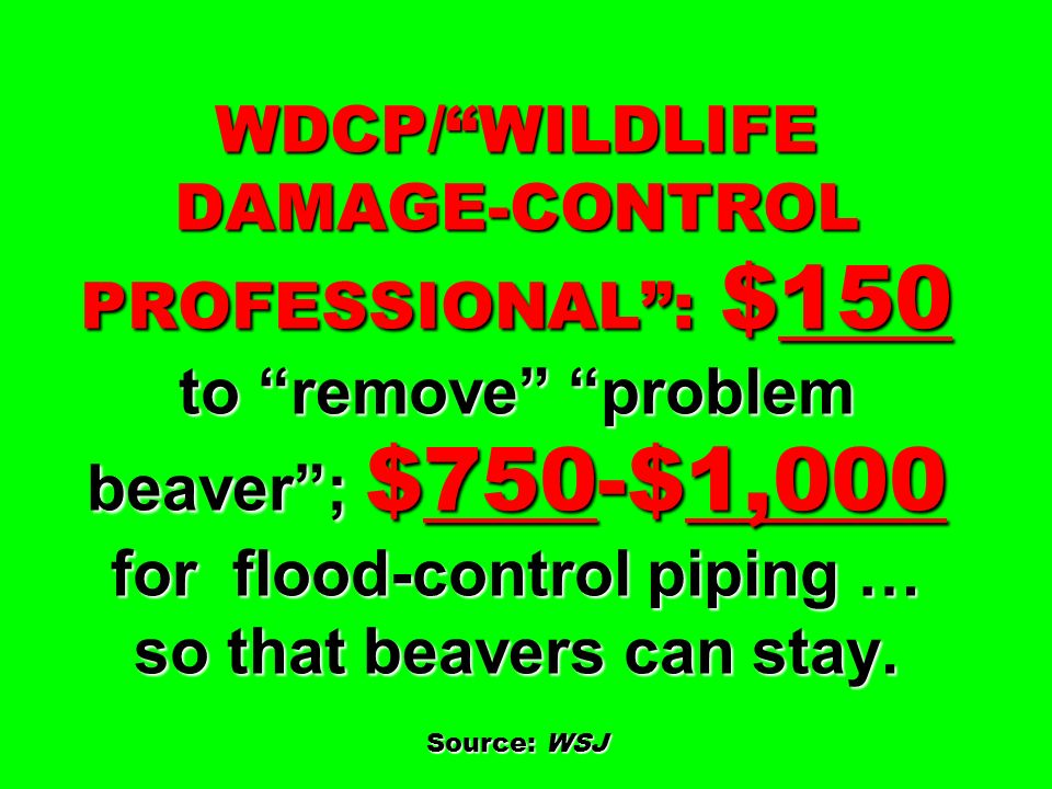 WDCP/ WILDLIFE DAMAGE-CONTROL PROFESSIONAL : $150 to remove problem beaver ; $750-$1,000 for flood-control piping … so that beavers can stay.