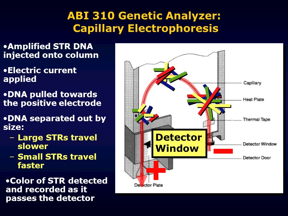 ABI 310 Genetic Analyzer: Capillary Electrophoresis