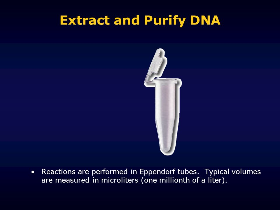 Extract and Purify DNA Reactions are performed in Eppendorf tubes.