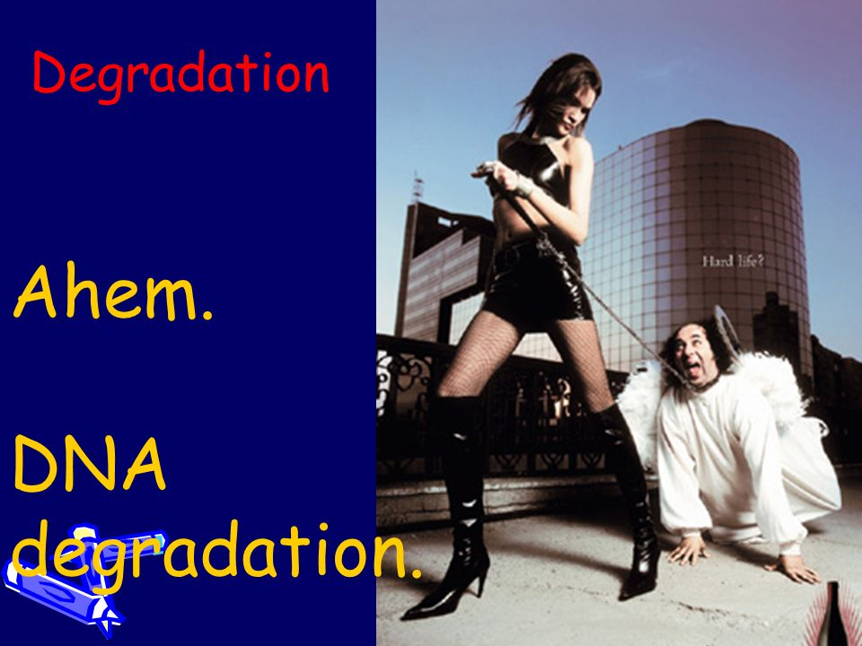 Degradation Ahem. DNA degradation.