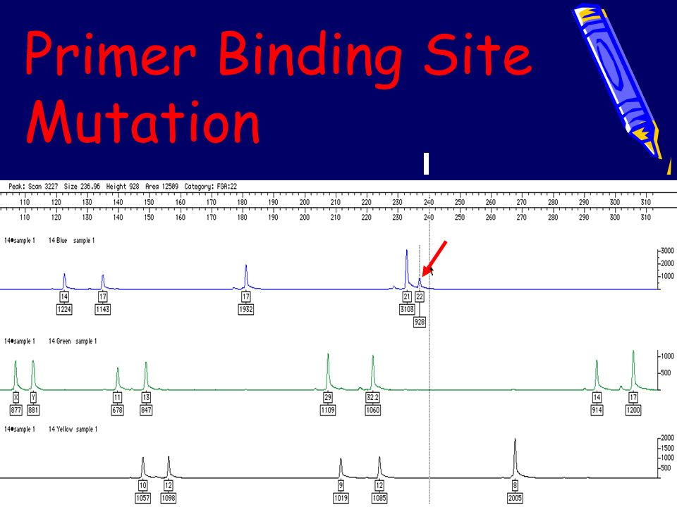 Primer Binding Site Mutation