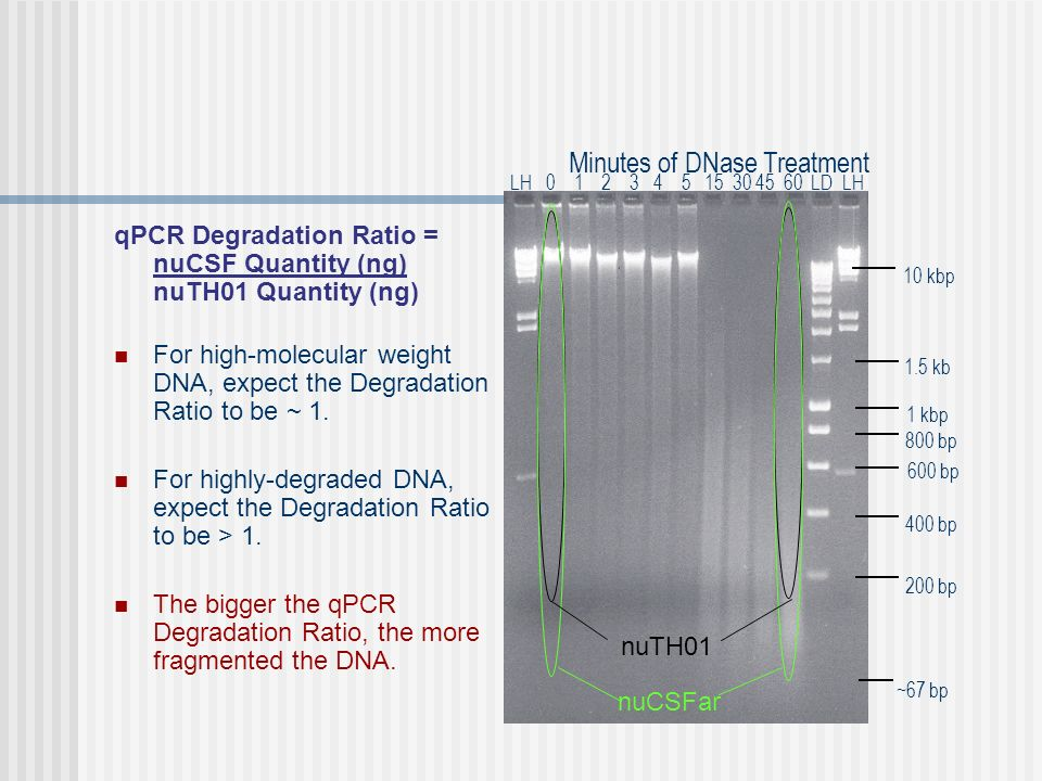 Minutes of DNase Treatment