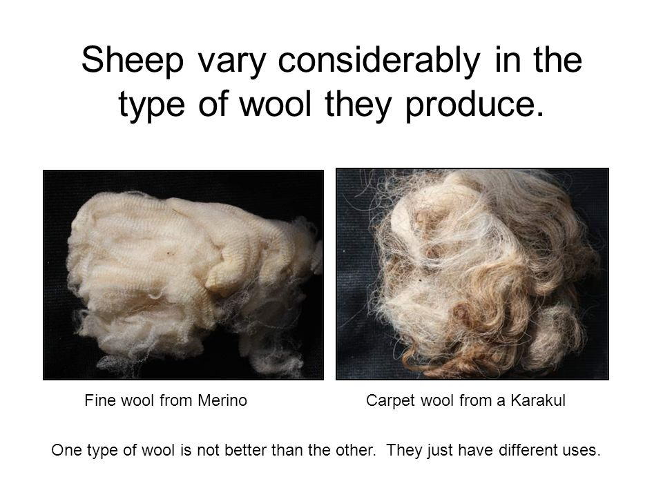 Sheep vary considerably in the type of wool they produce.