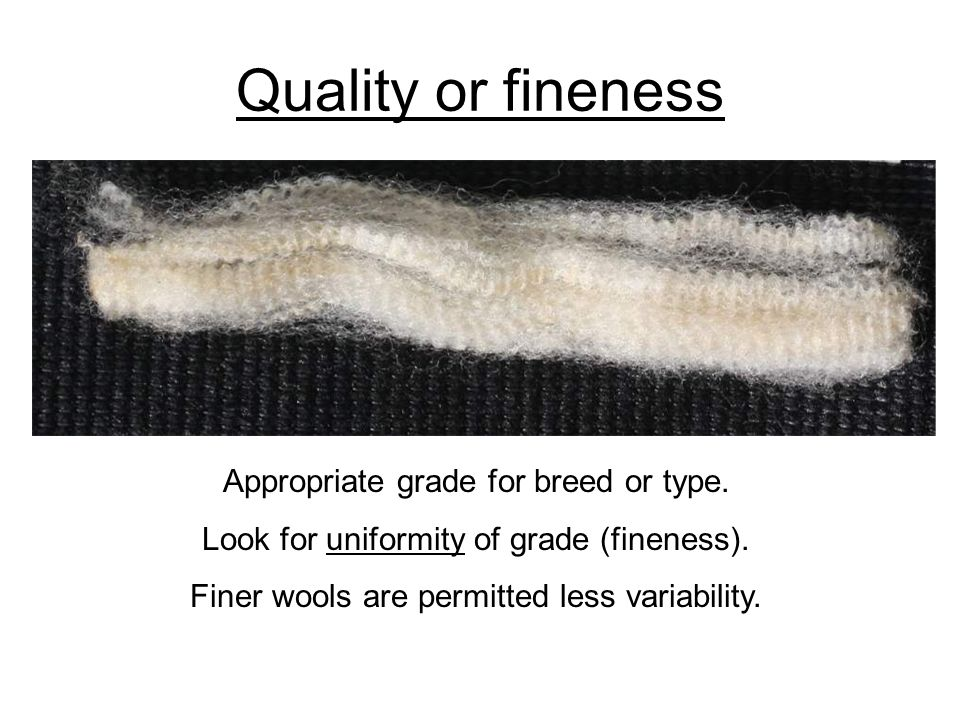 Quality or fineness Appropriate grade for breed or type.