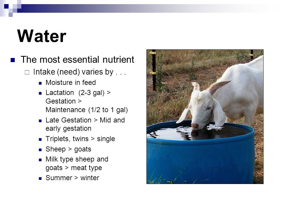 Water The most essential nutrient Intake (need) varies by . . .