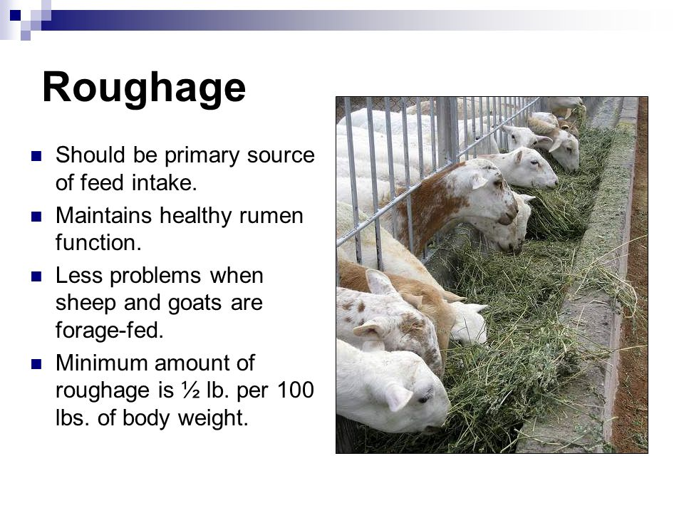 Roughage Should be primary source of feed intake.