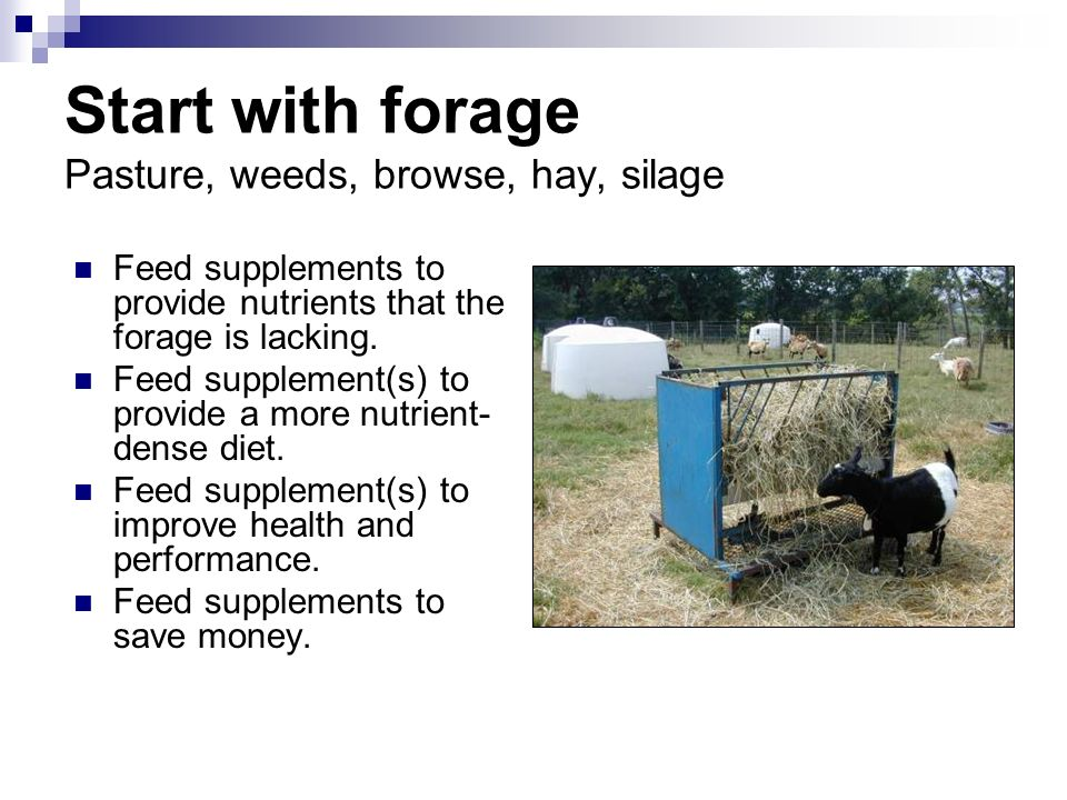 Start with forage Pasture, weeds, browse, hay, silage