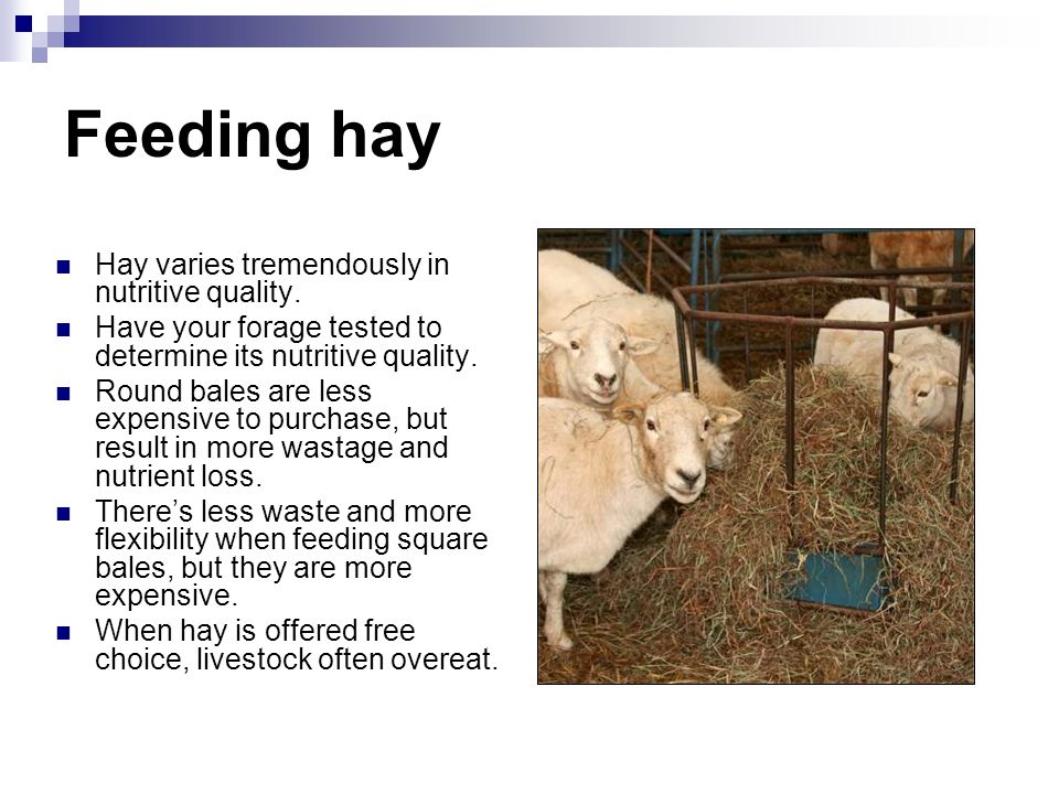 Feeding hay Hay varies tremendously in nutritive quality.
