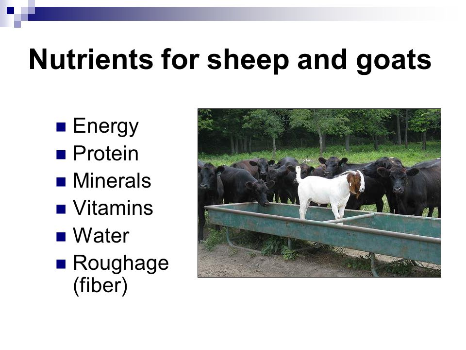 Nutrients for sheep and goats