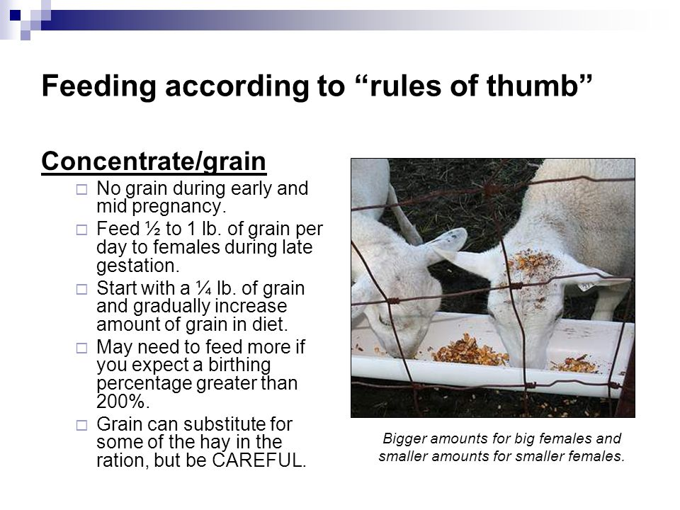 Feeding according to rules of thumb