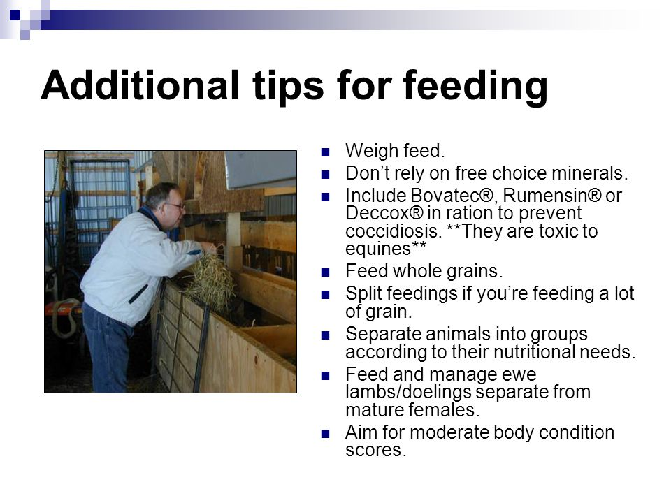 Additional tips for feeding