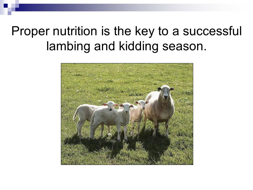 Proper nutrition is the key to a successful lambing and kidding season.