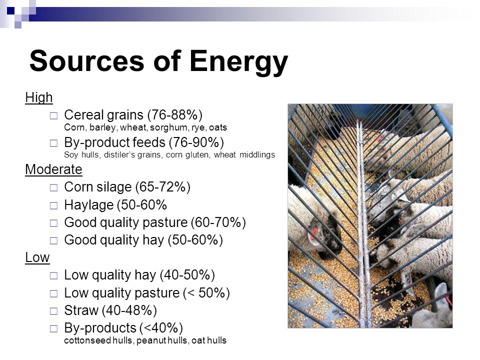 Sources of Energy High. Cereal grains (76-88%) Corn, barley, wheat, sorghum, rye, oats.