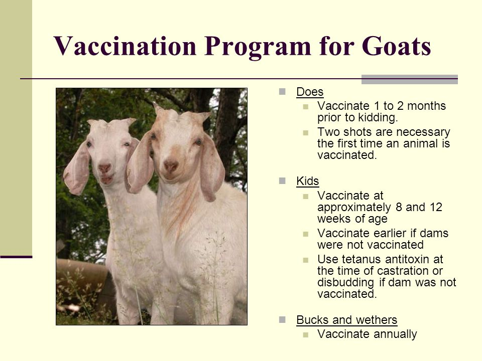 Vaccination Program for Goats