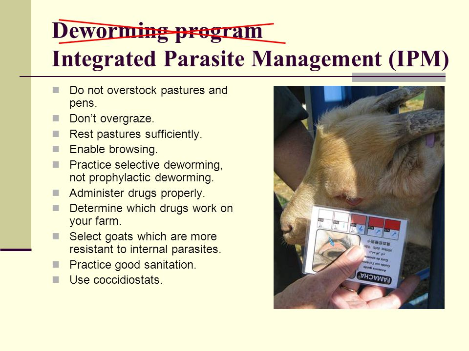 Deworming program Integrated Parasite Management (IPM)