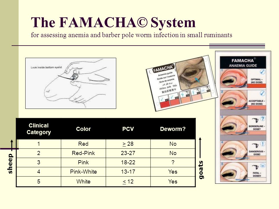 The FAMACHA© System for assessing anemia and barber pole worm infection in small ruminants