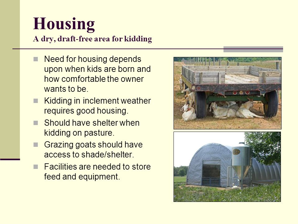Housing A dry, draft-free area for kidding