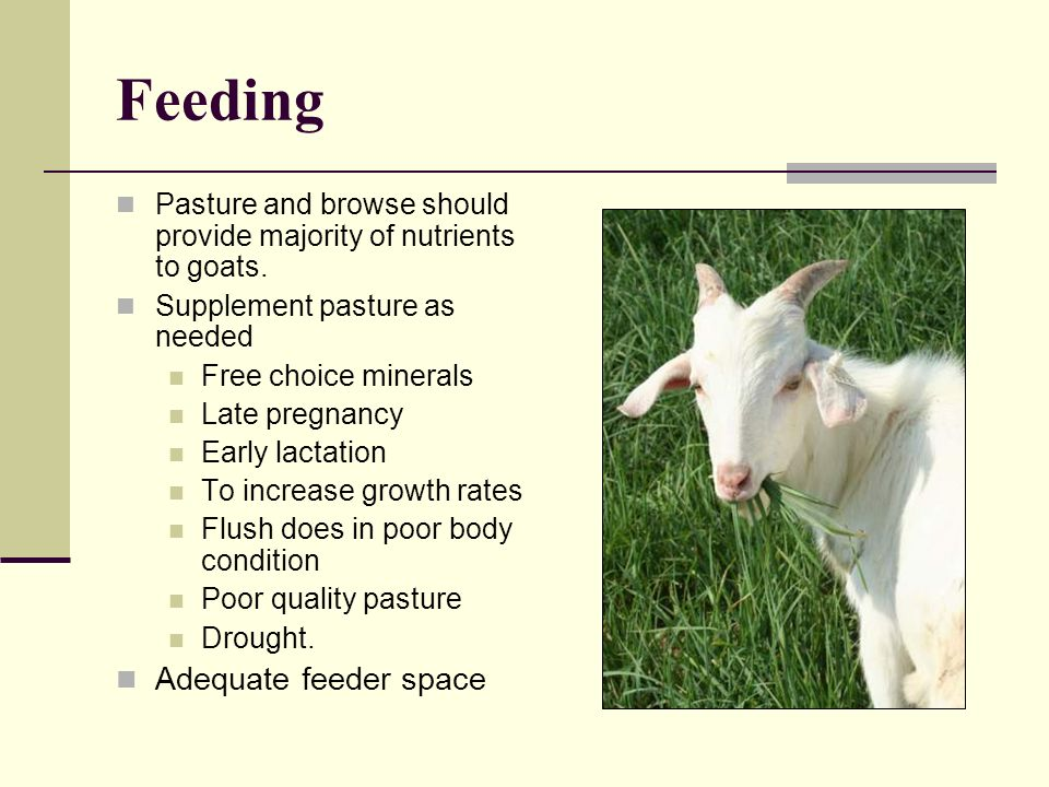 Feeding Adequate feeder space