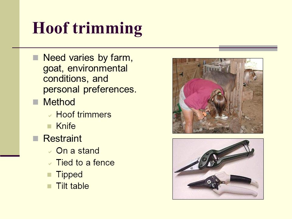Hoof trimming Need varies by farm, goat, environmental conditions, and personal preferences. Method.