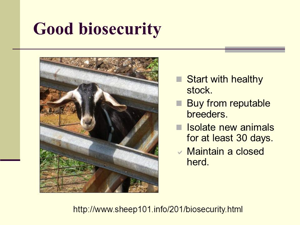 Good biosecurity Start with healthy stock.