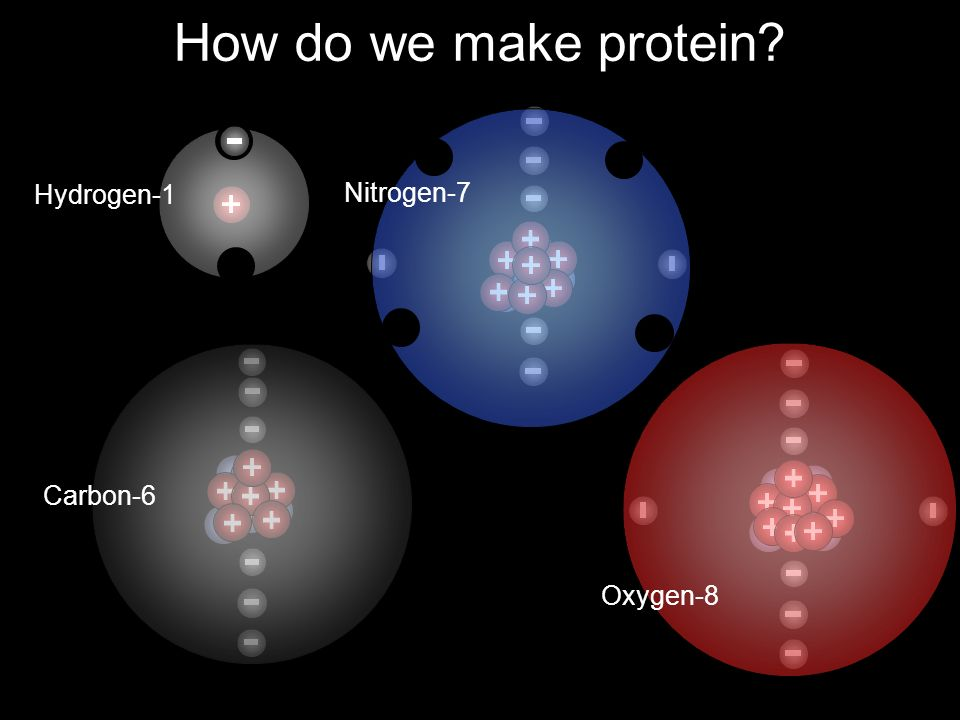 How do we make protein Hydrogen-1 Nitrogen-7 Carbon-6 Oxygen-8