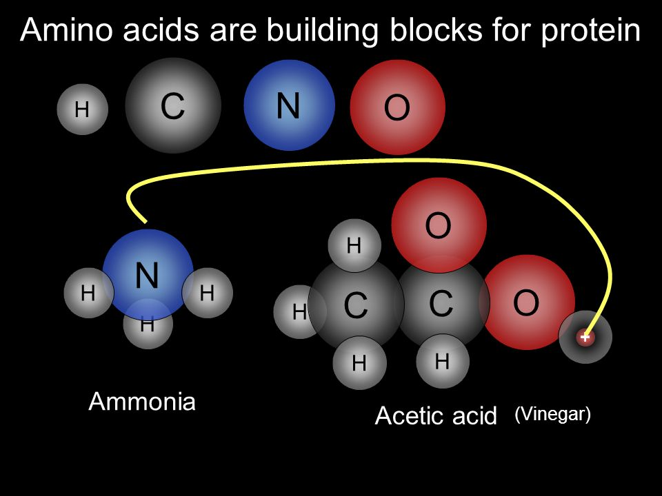 Amino acids are building blocks for protein