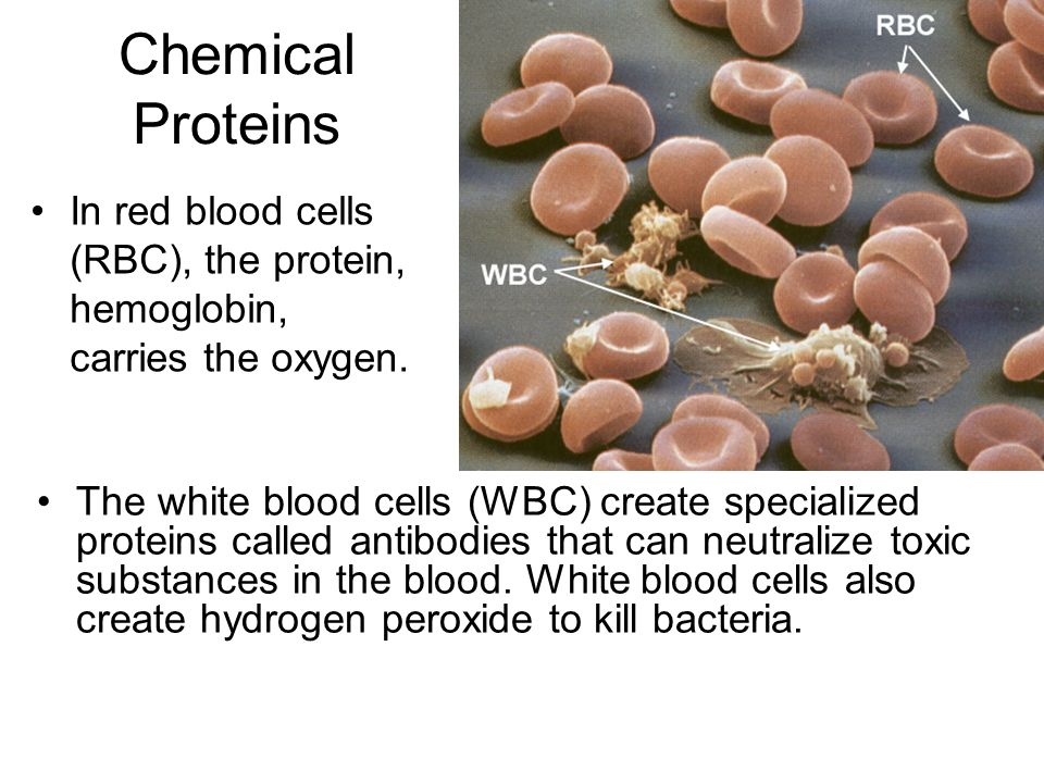 Chemical Proteins In red blood cells (RBC), the protein, hemoglobin, carries the oxygen.