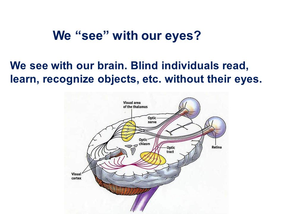 We see with our eyes. We see with our brain.