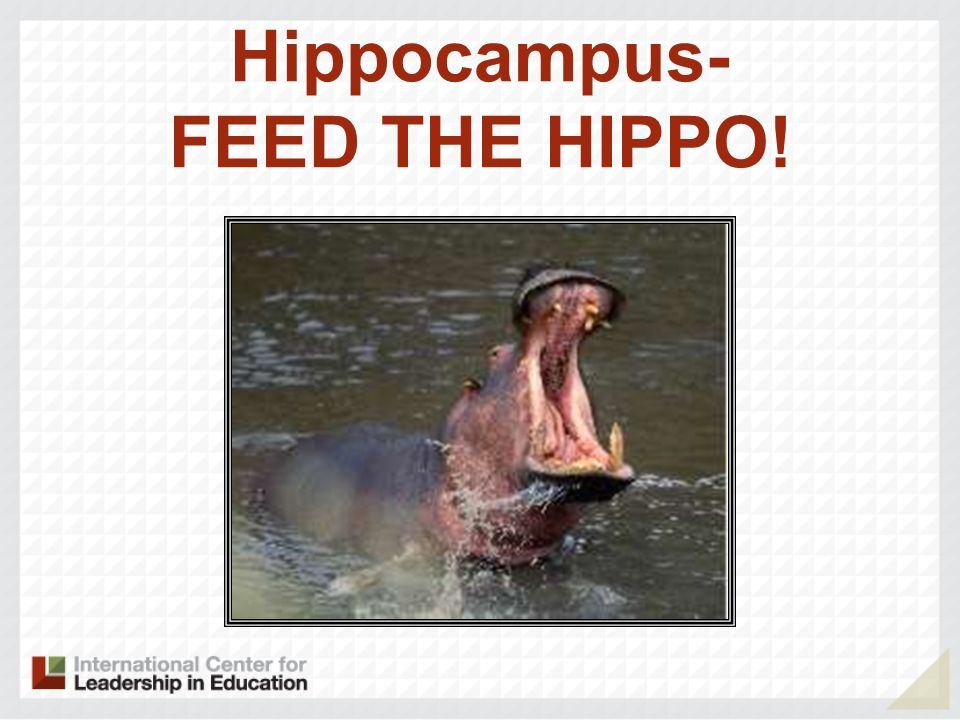 Hippocampus- FEED THE HIPPO!