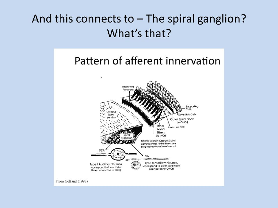 And this connects to – The spiral ganglion What's that