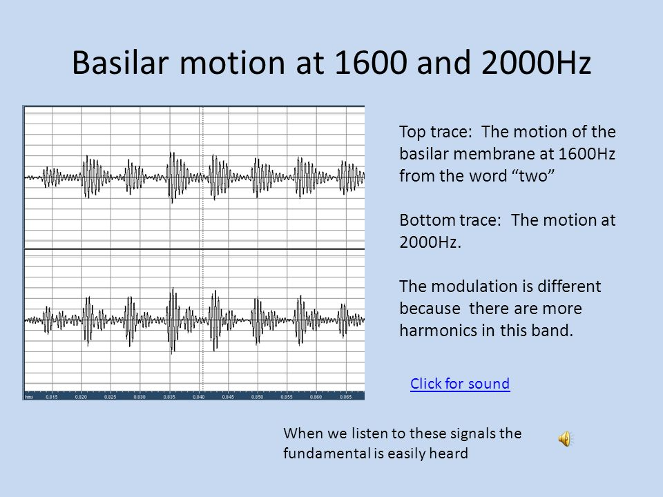 Basilar motion at 1600 and 2000Hz