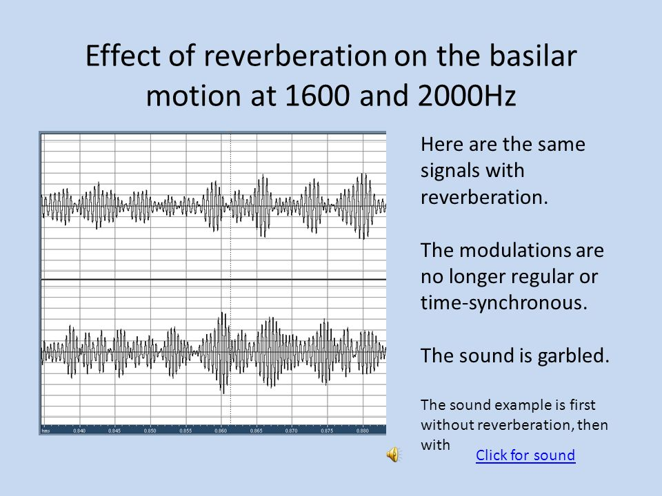 Effect of reverberation on the basilar motion at 1600 and 2000Hz
