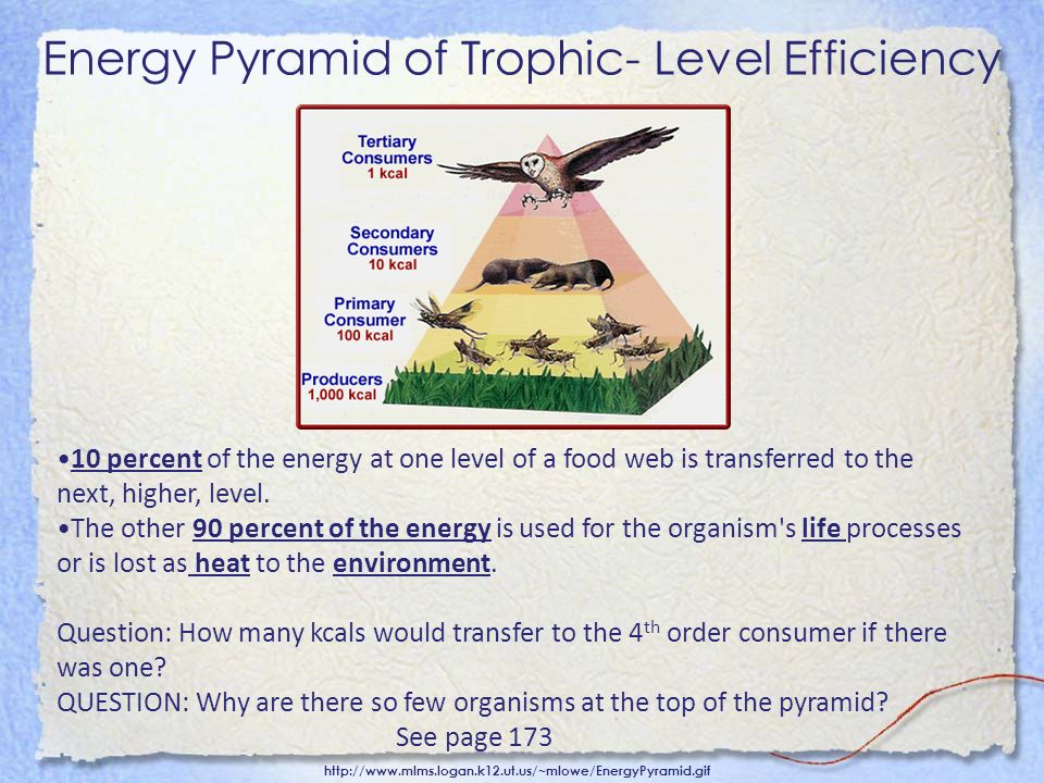 Energy Pyramid of Trophic- Level Efficiency