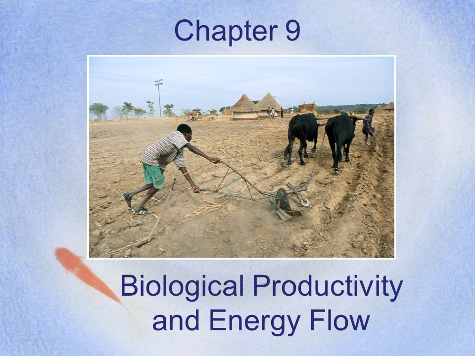 Biological Productivity and Energy Flow