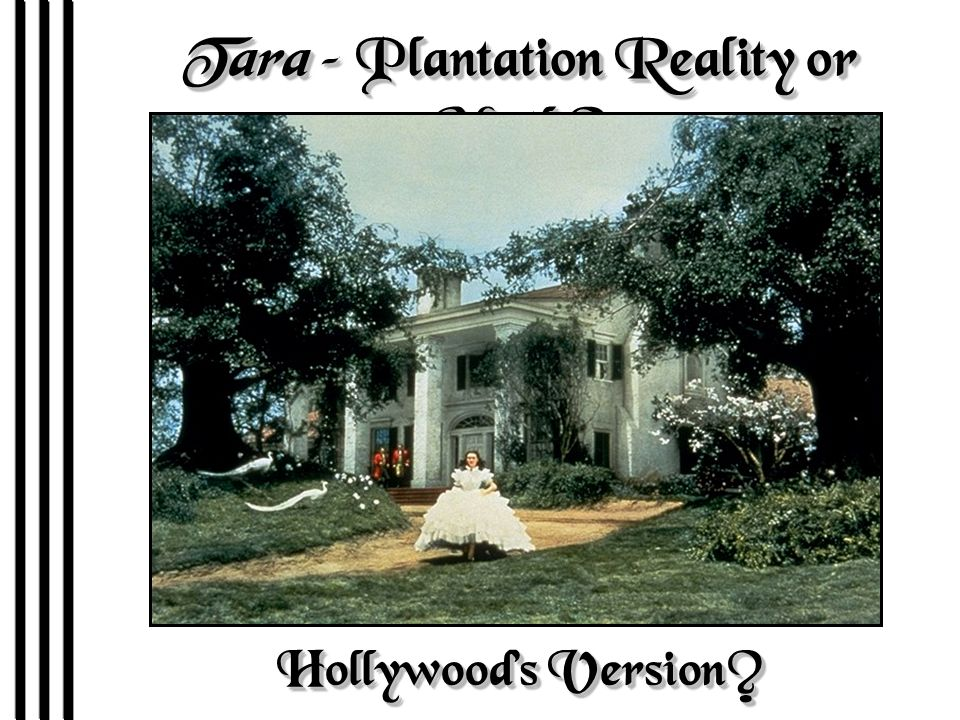 Tara – Plantation Reality or Myth