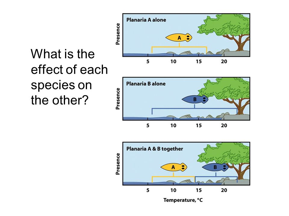 What is the effect of each species on the other