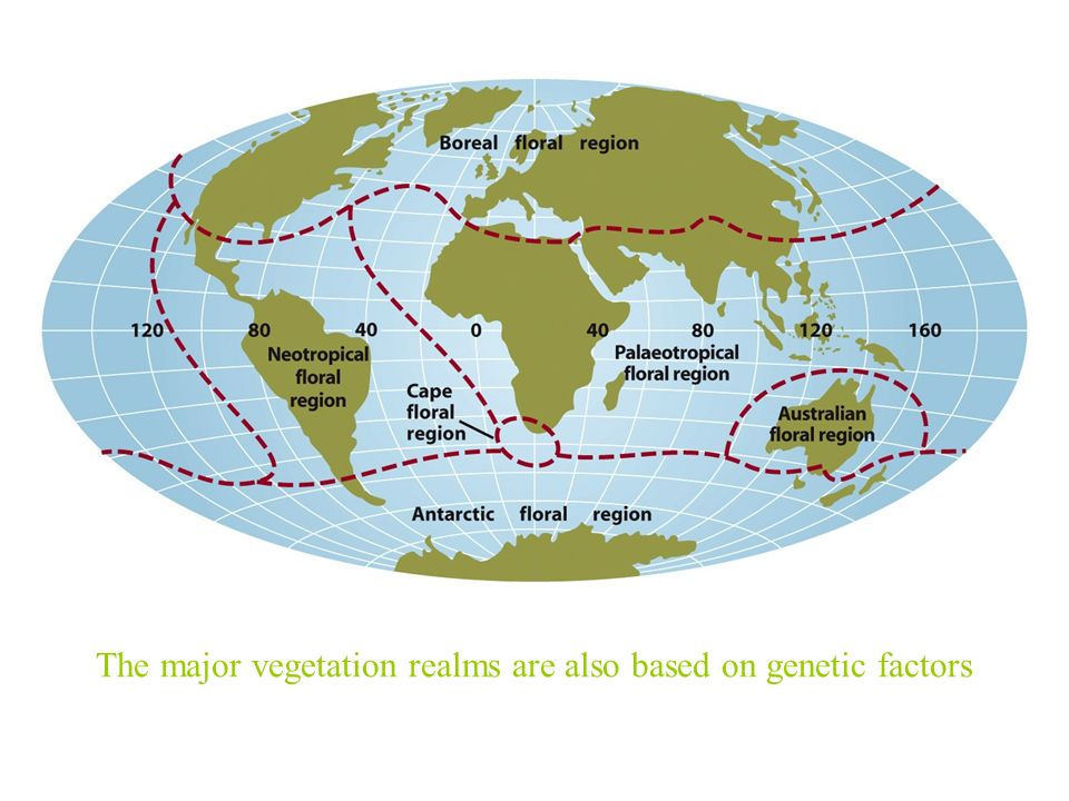 The major vegetation realms are also based on genetic factors