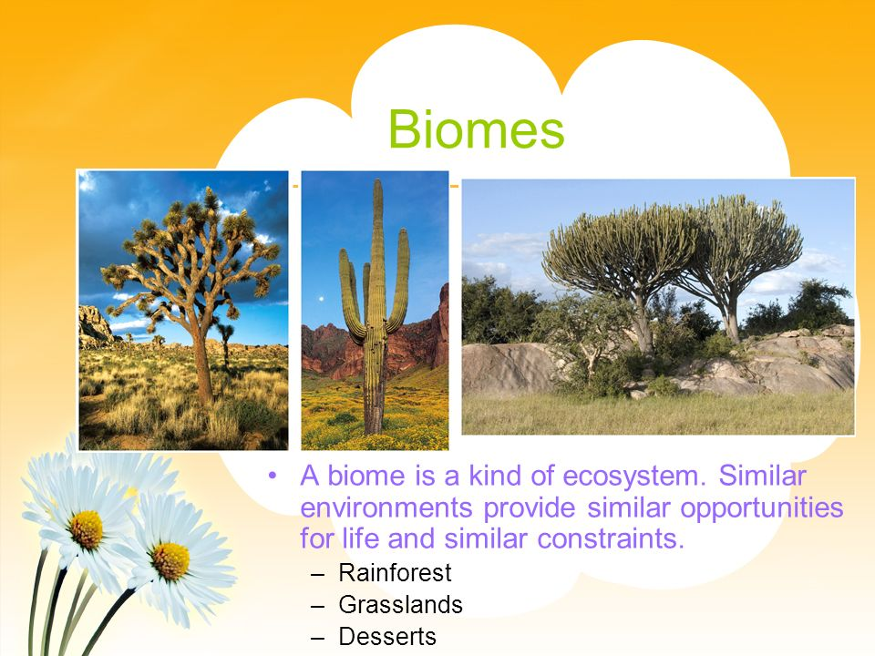 Biomes A biome is a kind of ecosystem. Similar environments provide similar opportunities for life and similar constraints.
