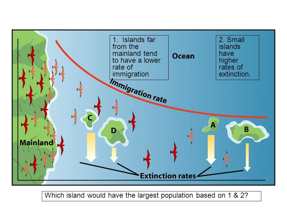 1. Islands far from the mainland tend to have a lower rate of immigration