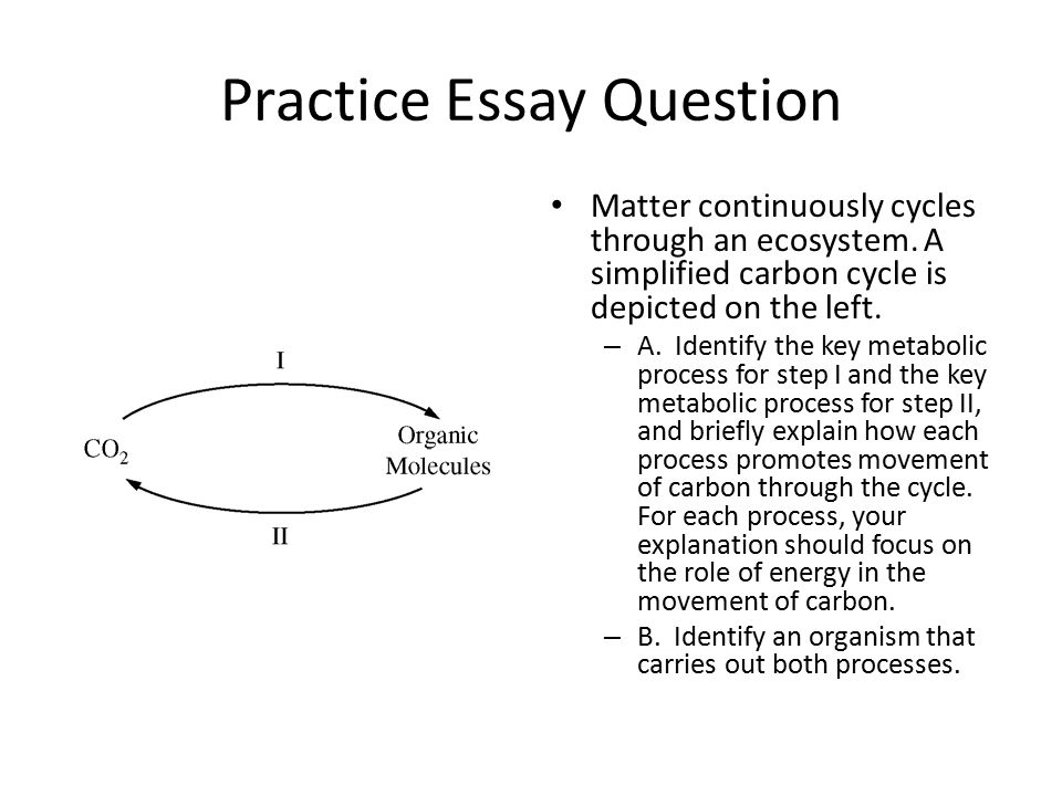 ap bio carbon cycle essay Ap biology photosynthesis teacher packet   the problem of photorespiration: the rubisco that fixes carbon in the calvin cycle is actually ribulose 1,5-bisphosphate carboxylase/oxygenase [-ase endings after all ☺] as the name implies, it can attach co2 (good) or o2 (bad.